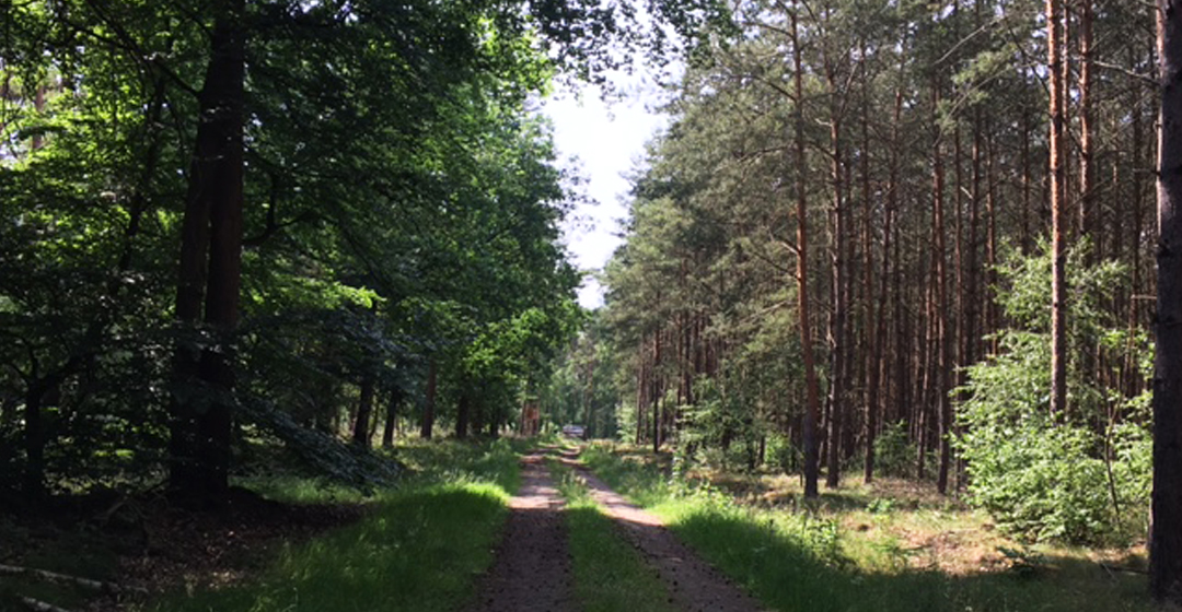 Amtshof Forstwirtschaft