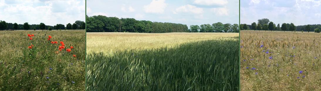 Amtshof Landwirtschaft